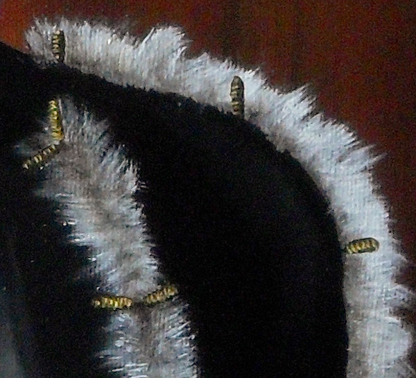 Detail of the tied cuts that were fashionable at the time. Many garments had 'cuts' in them allowing the underlying material to be seen or poke through - as in the case of fur. The longer cuts are tied together by these small, golden toggles. Here, you can also see that white fur is not just white - there are around ten layers of various greys here so that the fur looks like real fur. One of the problems with canvas is that the level of detail you can paint on it is to a great extent dependent upon the depth and pitch of the canvas' weave - you will be able to see the difference between the two when you look at the corresponding image in the Paddy Panel details page. Copyright (c)2016 Paul Alan Grosse